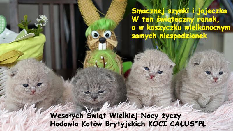 MIOT F Koci Całus*PL